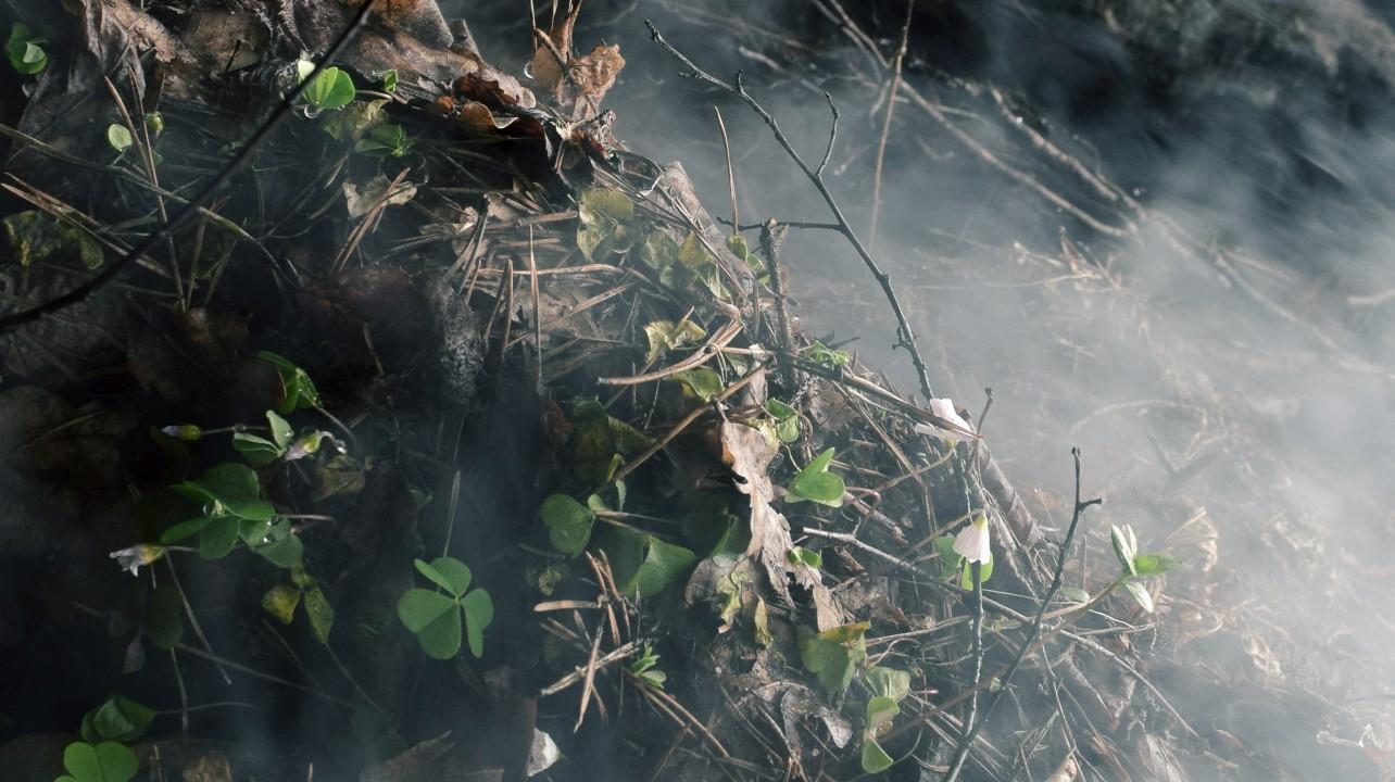 Szczur nadjadł węża boa i maseczki ochronne na twarz z kobiecych majteczek oraz pożary i powodzie.